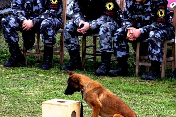 Evento reuniu Exército, Força Aérea e policias do Rio Grande do Sul