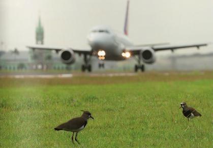 Em doze meses, Brasil registrou 1.625 colisões entre aeronaves e aves. Maior problema são os lixões