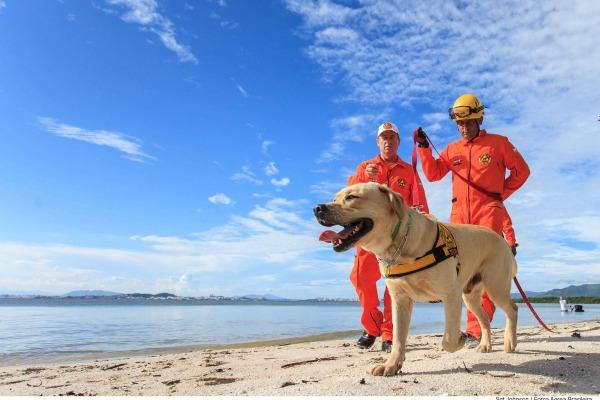 O Exercício Carranca IV conta com dois labradores e uma foxhound