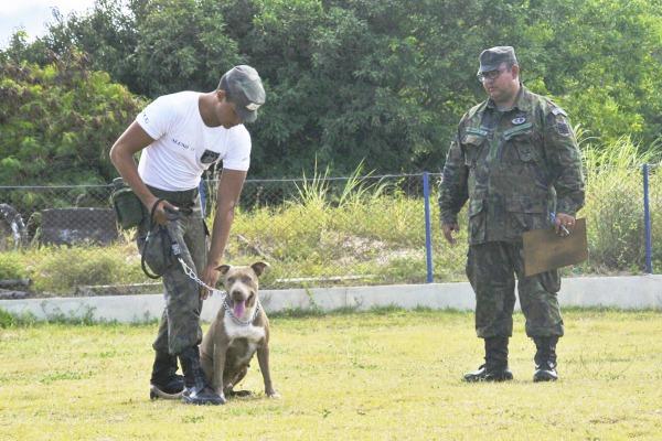 Animais são empregados na detecção de explosivos e entorpecentes
