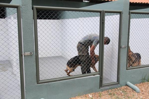 Condutores são treinados para trabalho com cães   Sargento Carleilson