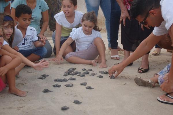 Projeto Tamar celebra 25 milhões de tartarugas soltas em 35 anos