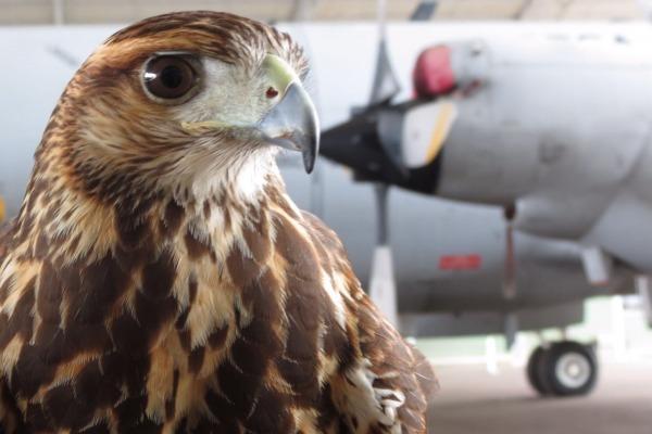 Alunos da Universidade Estadual de Santa Cruz tiveram disciplina voltada para os perigos de animais e aeronaves em um mesmo ambiente