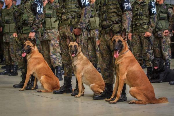 Cães fazem parte do apoio à tropa de GLO