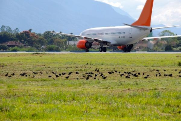 Entre 2011 e 2015, foram recebidos 8.229 reportes de colisões com fauna no Brasil