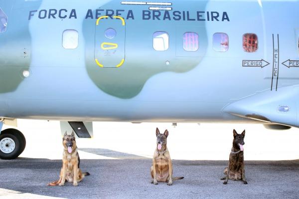 Os cachorros são das raças pastor alemão, belga malinois e holandês