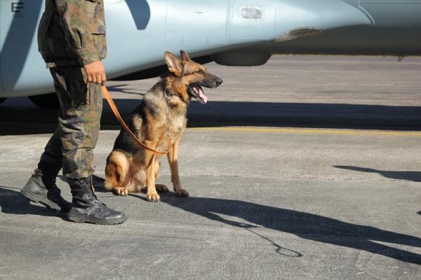 Cães da FAB participam de missão em Rio Branco, no Acre