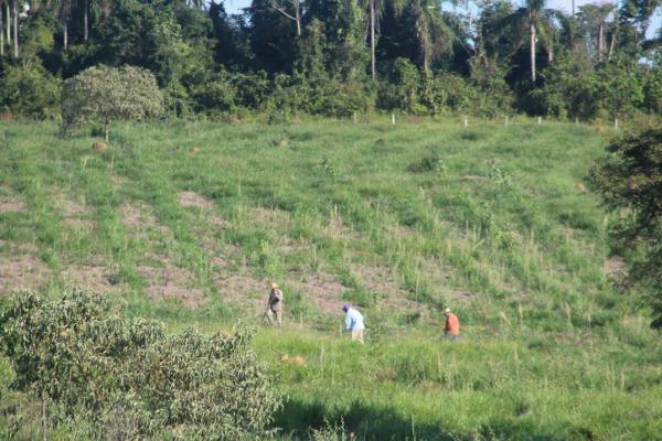 A meta é chegar a 80 mil mudas; a ação contribui para a recuperação desse importante bioma do País