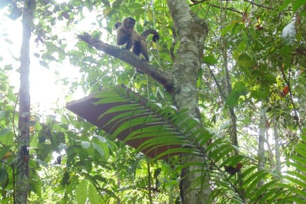Após a reintrodução dos animais na área escolhida, eles foram monitorados durante três dias