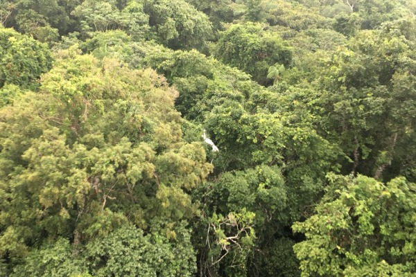 Região no norte do Mato Grosso é de mata extremamente fechada