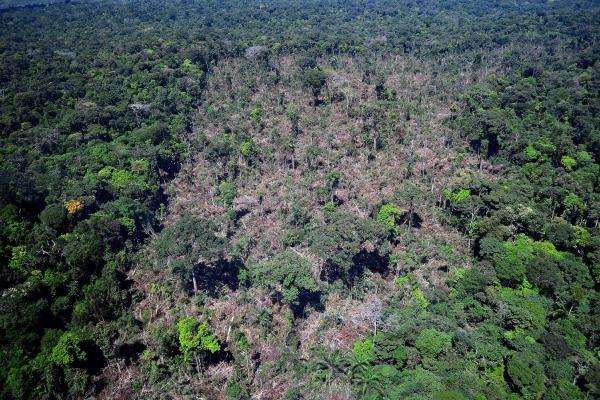 Área de desmatamento / Vinícius Mendonça