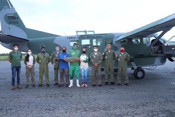 A aeronave C-98 Caravan, do Centro de Lançamento de Alcântara, realizou o translado do animal que está em extinção no País