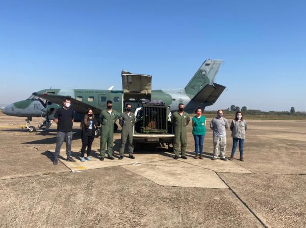 A aeronave decolou de Guarulhos na manhã deste sábado (24), e pousou à tarde, em Canoas